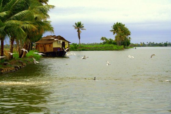 cochin backwaters 2
